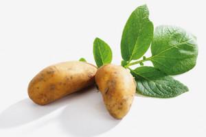 Các loại thực phẩm gây ung thư nếu bảo quản trong tủ lạnh